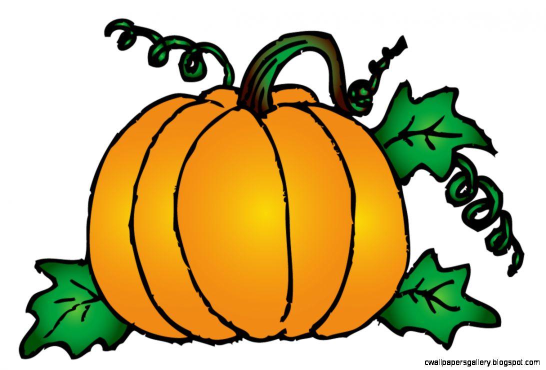 Libby S Pumpkin Patch Ccwc